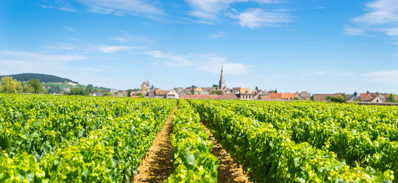 https://bcyclet.com/wp-content/uploads/2020/01/burgundy-bcyclet-bike-tour-vineyards-self-guided-23.jpg