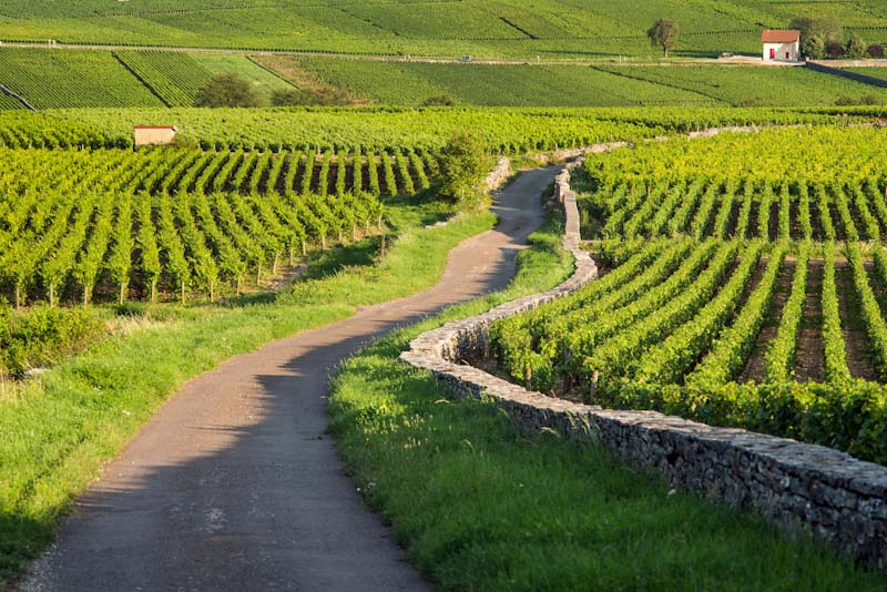 https://bcyclet.com/wp-content/uploads/2020/01/burgundy-bcyclet-bike-tour-vineyards-self-guided-6.jpg